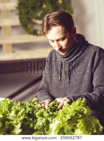 Handsome young grower carefully checking plants indoor. Cuisine, nutrition, vegetarian and growing concept.