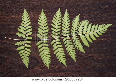 Fern leaf lying on dark wooden plank