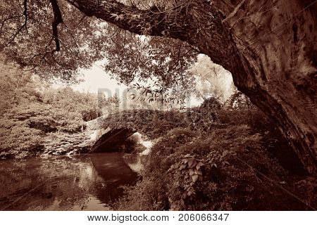 Central Park Spring with bridge in midtown Manhattan New York City