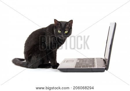 Black cat with a contemplating look on her face sitting in front of a laptop computer, on white background