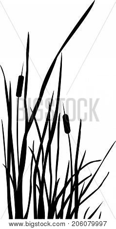 Silhouette of Reed Bush. Black and White. Vector Illustration