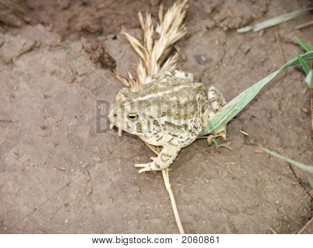 Small toad sitting on a weed in nature poster
