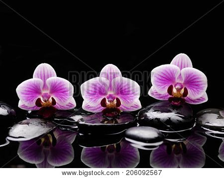 Still life with three pink orchid with therapy stones