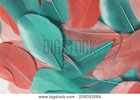 Multi-colored Bird Feathers Of Different Colors: Red, Pink And Green Are Scattered All Over The Fiel