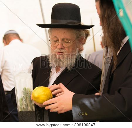 JERUSALEM, ISRAEL - OKTOBER 16, 2016: Elderly ortodox Jew with grey beard in black hat is checking ritual plant citrus- etrog. Traditional market before the holiday of Sukkot