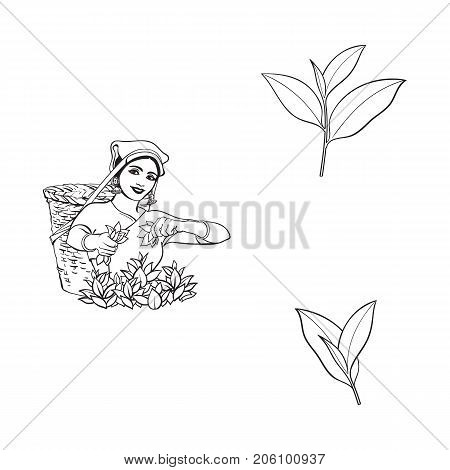vector sketch cartoon indian Sri-lanka local woman collecting tea in tradition way smiling in big wicker basket, tea leaves set. Traditionally dressed female character, hand drawn india symbols