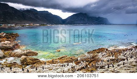Beautiful landscape of Betty's Bay, many wild little penguins on the rocky shore, amazing beauty of a African nature, exotic traveling, South Africa