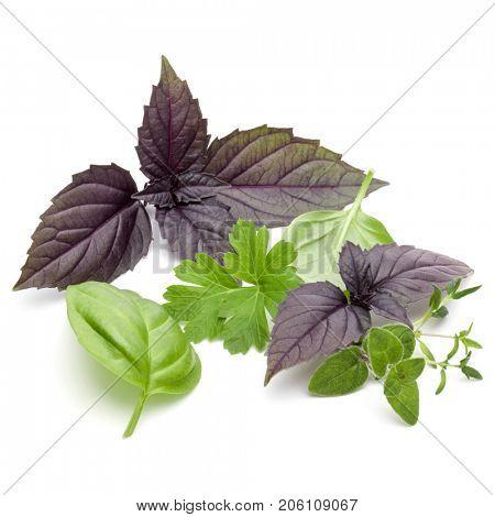 Fresh herb leaves variety isolated on white background. Purple dark opal basil, sweet basil, oregano, thyme,  parsley.