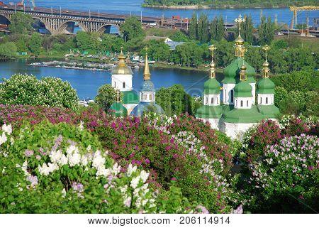botanical garden  in Kiev, lilac blossom , spring