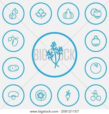 Set Of 13 Editable Vegetable Outline Icons. Includes Symbols Such As Cocos, Goji, Hazelnut And More