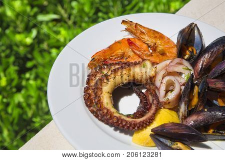 Set of seafood. Mix of mussels, octopus, squid and shrimps on grass background. Plate of seafood is on the edge of the table, against the background of a green lawn. Plate of seafood on a sunny day.