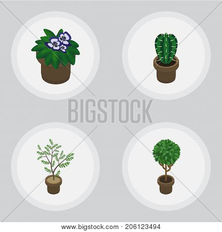 Isometric Plant Set Of Flowerpot, Fern, Tree And Other Vector Objects