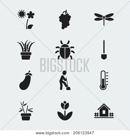 Set Of 12 Editable Gardening Icons. Includes Symbols Such As Insects, Vera, Aubergine And More