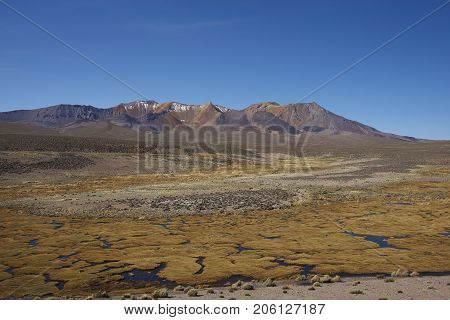 The altiplano, around 4000 metres above sea level, in Lauca National Park, Chile. In the foreground is a wetland area known locally as a bofedal, beyond are the colourful slopes of an extinct volcano.