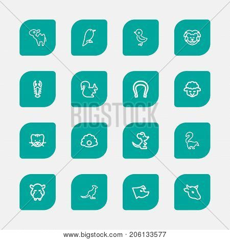 Set Of 16 Editable Zoology Outline Icons. Includes Symbols Such As Lion, Bobcat, Horseshoe And More