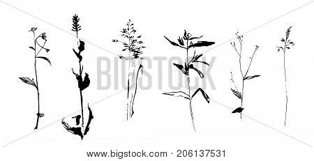 Set of hand drawn weed field herbs. Sketch or doodle style vector illustration of a plant. Plants as element of design. Black image on white background.