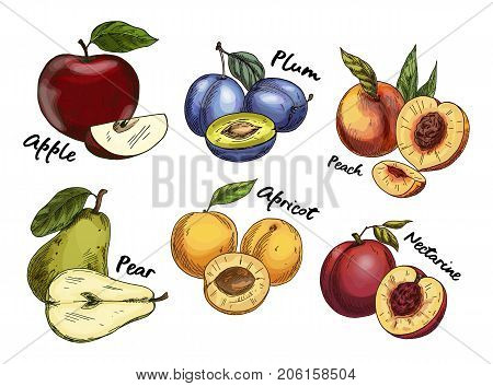 Set of isolated sketches of fruits like apple and plum, pear and apricot, nectarine. Vitamin natural food. Vegetarian or vegan, veggie nutrition for market. Farming and agriculture theme