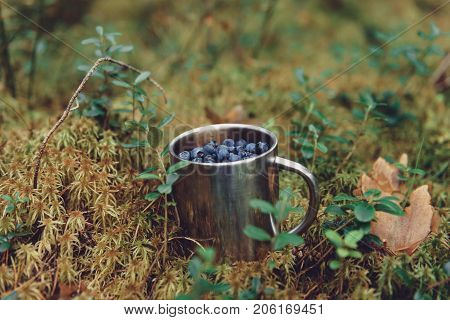 Blueberries In Metal Cup In Forest. Fresh Blueberries In Metal Cup On The Ground In Forest. A Cup Of