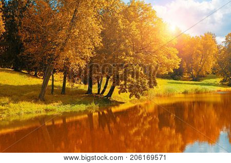 Autumn landscape. Yellowed autumn trees near the river in sunny autumn weather. Sunny autumn landscape with autumn trees and forest river. Forest autumn background. Golden autumn trees near the river