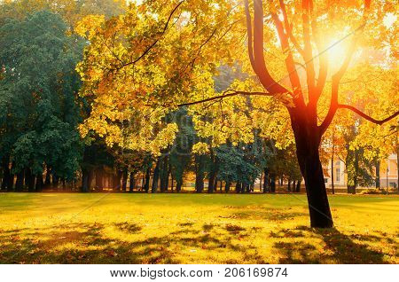 Autumn landscape. Sunny autumn park with golden autumn trees lit by bright sunshine. Autumn trees in the park in sunny autumn nice weather. Sunny autumn landscape. Autumn park nature