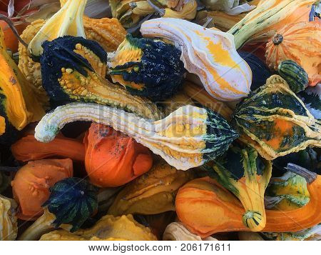 Collection of brightly colored gourds in a pile