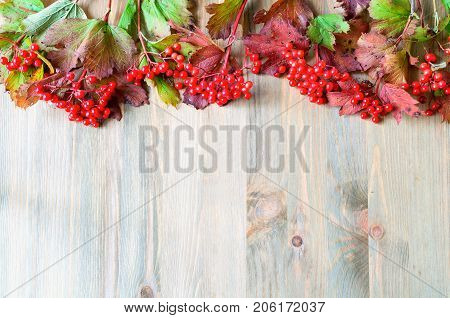 Fall background with seasonal fall nature berries of Viburnum on the wooden background. Fall still life, free space. Fall berries on the wooden background, fall concept.  Fall composition.