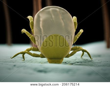 medically accurate 3d rendering of a tick