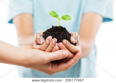 New life concept - parent and child hands holding small green plant sprout leaf growth at dirt soil heap white isolated