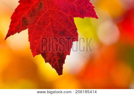 Colorful autumn leaves background, close-up.