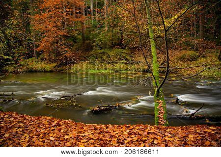 Colorful autumn forest with spring. Beautiful rural scenery.