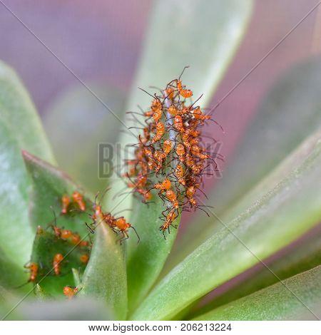 Assassin parasite assassin bug on green plant
