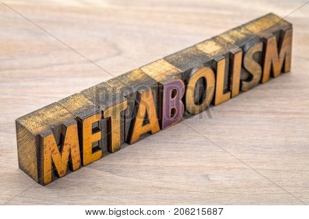 metabolism - word abstract in vintage letterpress wood type printing blocks