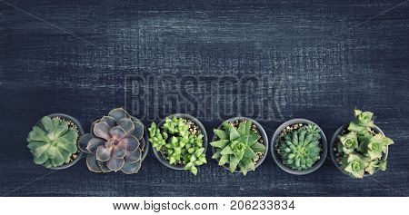 Different succulents above the black wooden background