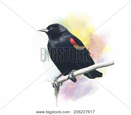 Digital Painting of  Red-Winged Blackbird