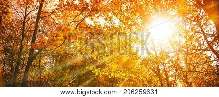 Autumn sunshine through autumn treetops with colorful leaves