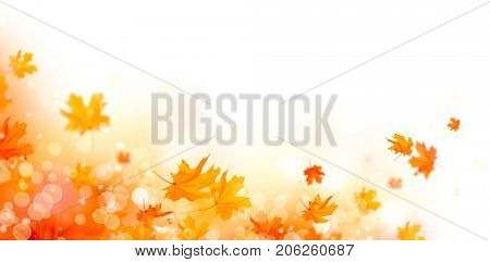 Autumn background. Fall Abstract autumnal background with colorful leaves, on wind, colorful bright leaves, yellow, orange and red colors backdrop. Abstract art design. Isolated on white.