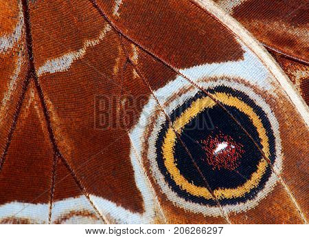 Detailed macro of tropical butterfly wing