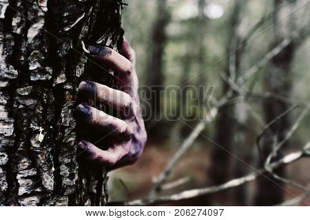 closeup of the bloody and scary hand of a zombie or monster who is hiding behind a tree in the forest