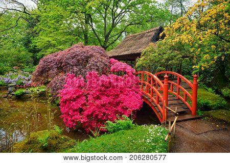Small bridge in Japanese garden, Park Clingendael, The Hague, Netherlands