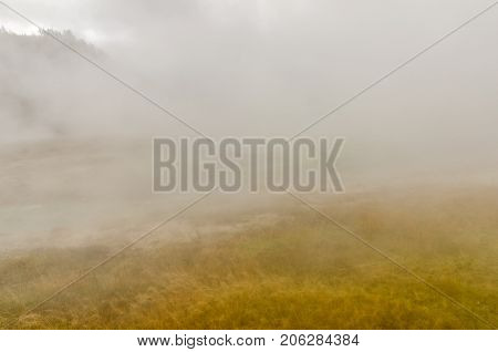 Golden blades of grass are all you can see until the wind clears a small area of fog and a mountain top appears in a thermal area at Yellowstone National Park.