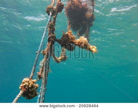Linien mit Korallen in klare blaues Meer