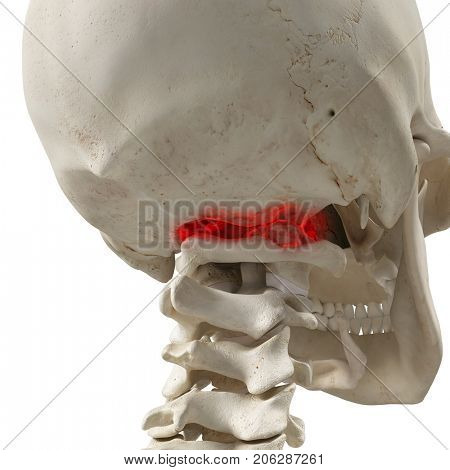 3d rendered medically accurate illustration of an arthritic atlas