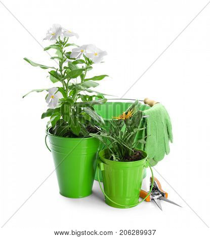 Composition with blooming plants, garden pruner and gloves on white background