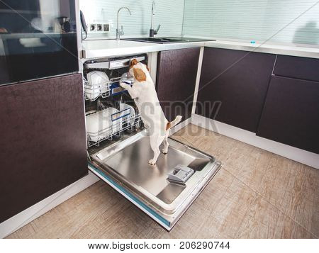 Dog licking dishes in the dishwasher. Fun pet. Humor