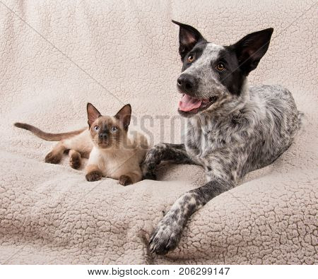 Young dog and cat lying side by side on a soft blanket, looking to the left of the viewer