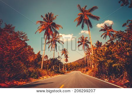 Colorful sunset landscape with empty road and palm trees in jungle against clear blue sky. Vintage retro post processed. Fashion, summer, vacation and tropical beach concept. Travel background