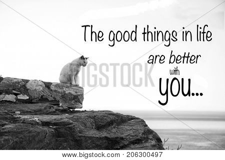 Inspirational quote The good thing inlife are better with you  on a picture with a lonely cat in black and white
