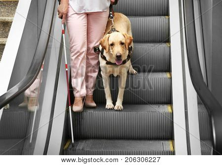 Blind woman with guide dog on escalator