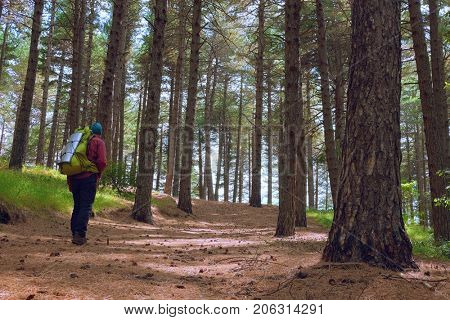 rear view man with backpack is walking in the forest pines of Etna Park, Sicily