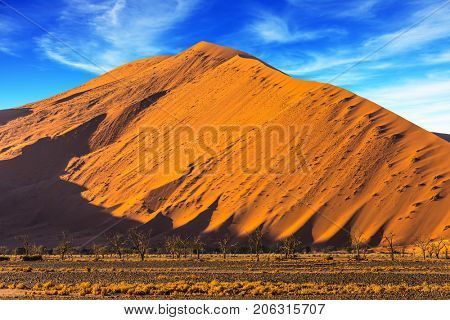 Whimsical forms of sand dunes created by the wind. Purple and yellow dunes of the Namib desert. Namibia, South Africa. The concept of extreme and exotic tourism